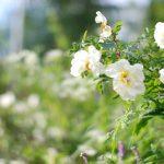 Kevätpäiväntasauksen jälkimaininkeja & luonnon ihmeitä